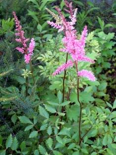 my-garden 037 (2)
