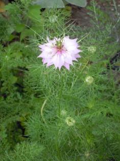 my-garden 006