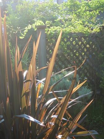 my-garden 009 (4)