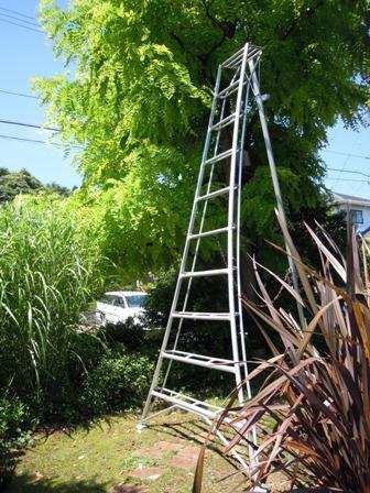 my-garden 031 (4)