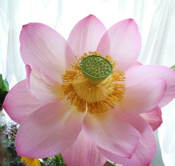 my-garden 012 (3)