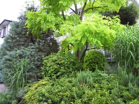 my-garden 061