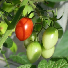 my-garden 031 (2)