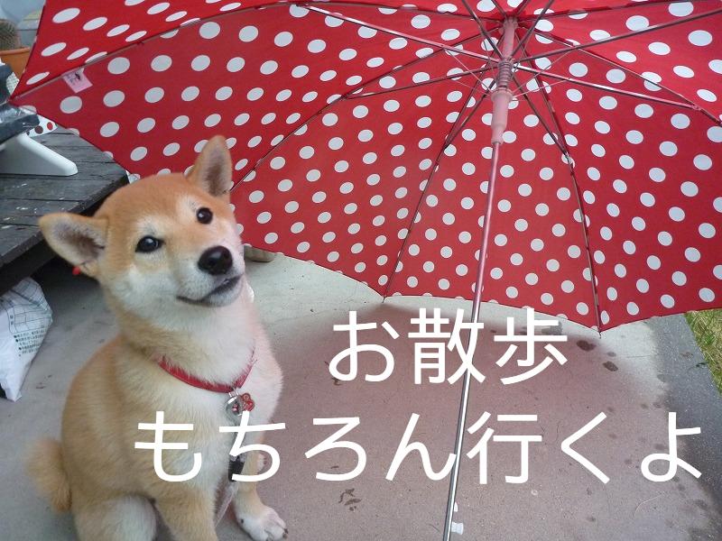 雨だけど 元気いっぱいのさくらさんです