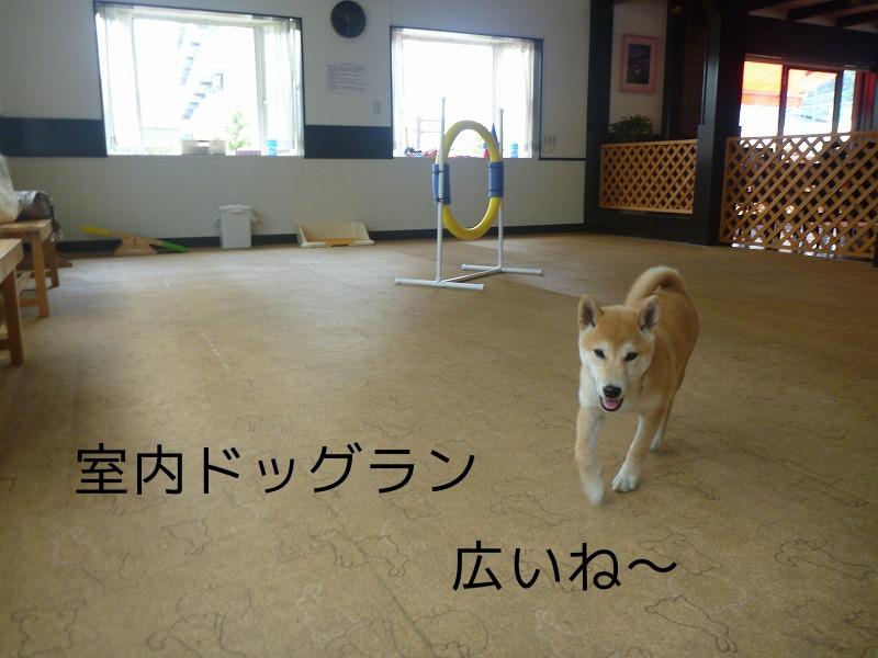 さくらドックカフェデビュ~!(Dog Run & Cafe ONE×2)
