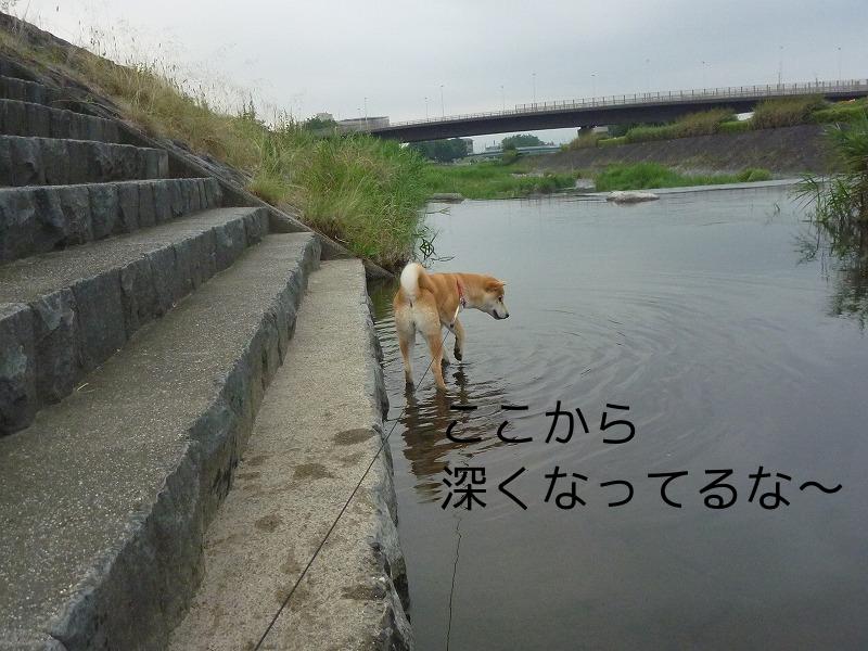 早朝 川遊び