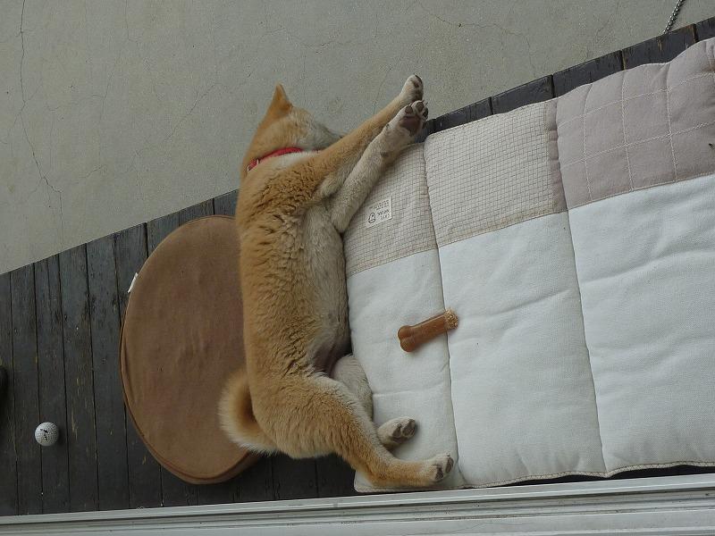 さくらさんの寝相 写真版