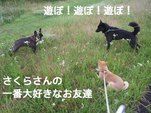 rCeY_blog.jpg