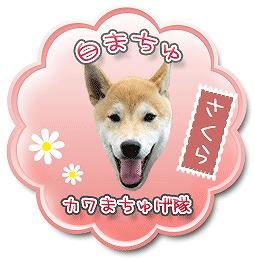 sakura_20110708145925.jpg