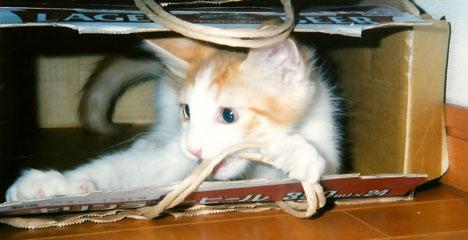 箱猫-02