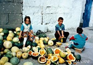 トルコ、カボチャの種取りを手伝う子供たち