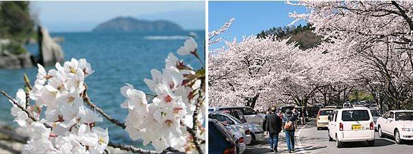 琵琶湖の神域、竹生島を湖北から臨む